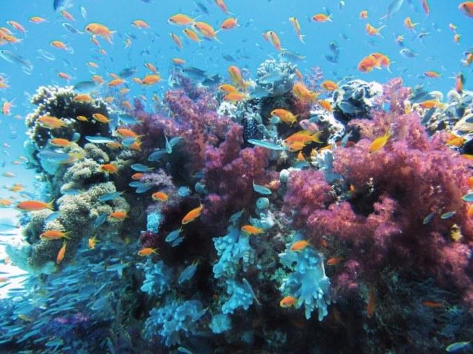 Italie_barrière_de_corail