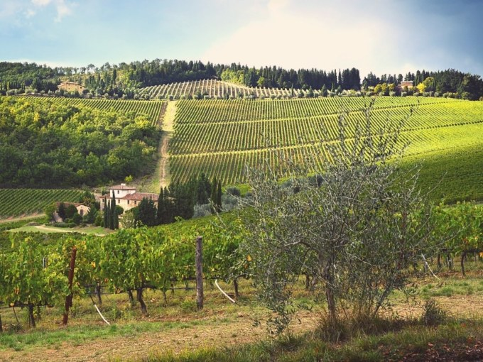 Vignobles autour de Florence